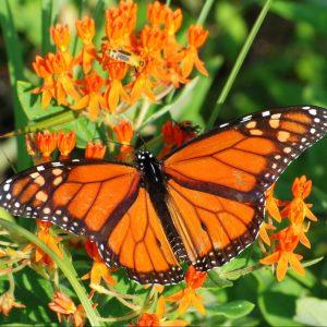 https://greensborobeautiful.org/wp-content/media/wildlife-support-image-scaled-e1623309917173.jpeg